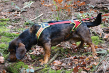 Dog Harness FOLLOW Trail