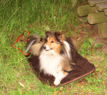 Portable Dog Bed MOBIL""