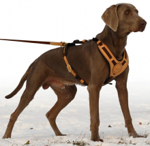 "Dog Harness ""Mantrailing"""