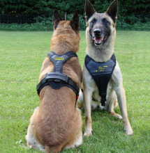 Dog Harness FOLLOW Sport